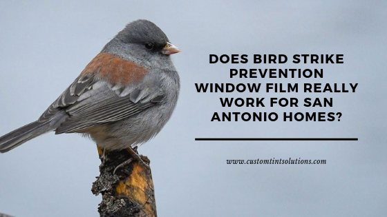 bird strike window film san antonio
