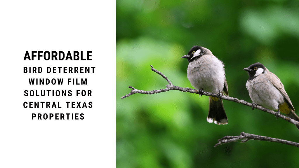 affordable bird deterrent window film central texas