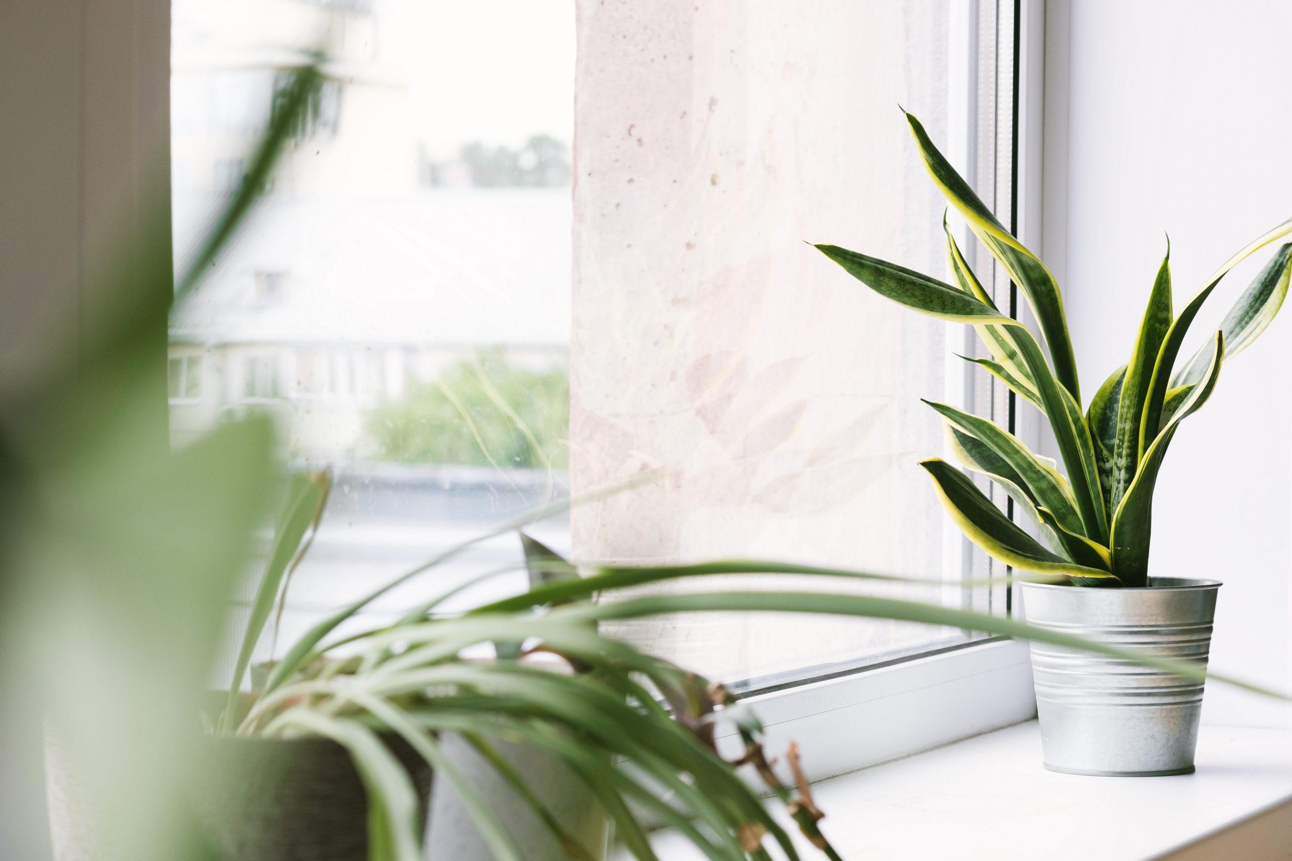 residential window film fort worth